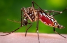 Health officials probe tie between Zika, paralyzing syndrome