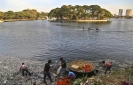Thousands of dead fish wash up on the banks of India river