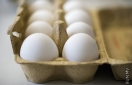 EU: 15 nations get tainted eggs, products in growing scandal