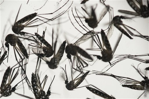 1st locally acquired Zika case confirmed in Chile