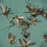 WHO says 3 Zika cases detected in western India last year