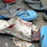 Trio of suicide bombers kill 20 at crowded market in Nigeria